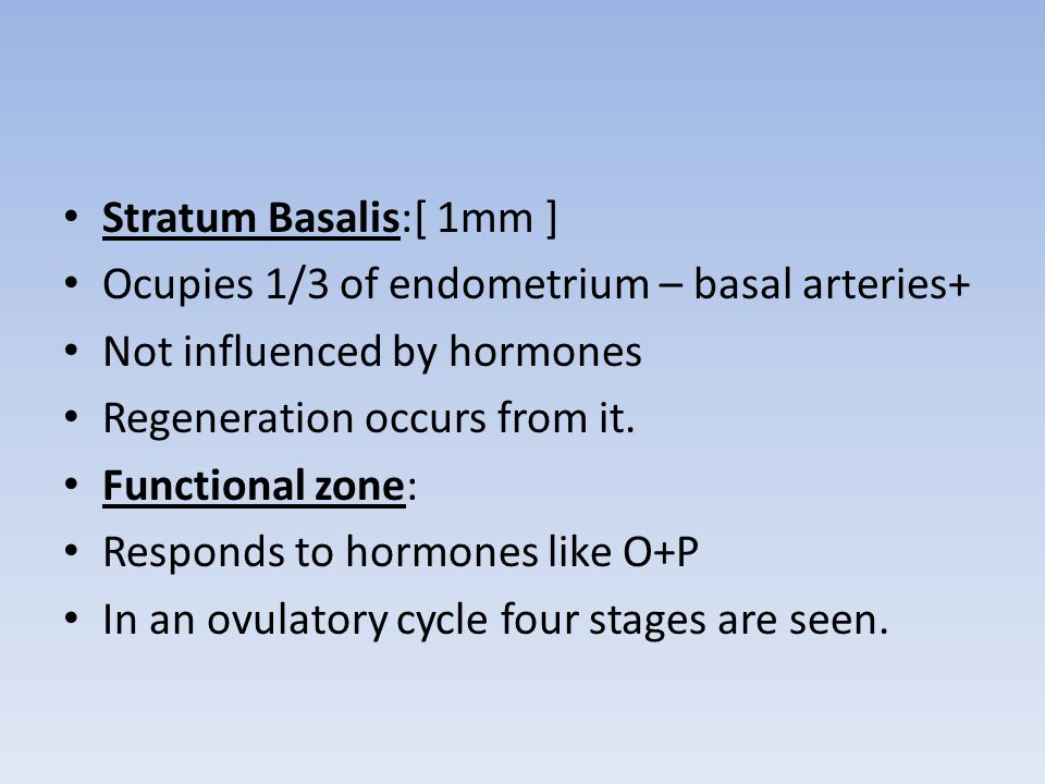 Stratum Basalis:[ 1mm ] Ocupies 1/3 of endometrium – basal arteries+ Not influenced by hormones. Regeneration occurs from it.